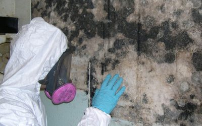 How to Remove and Treat Black Mold